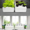 hydroponic-start-kit-nutrients-seeds-air-pump-sponge