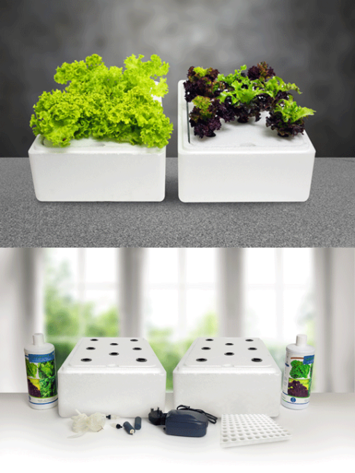 hydroponic-start-kit-nutrients-seeds-air-pump-sponge